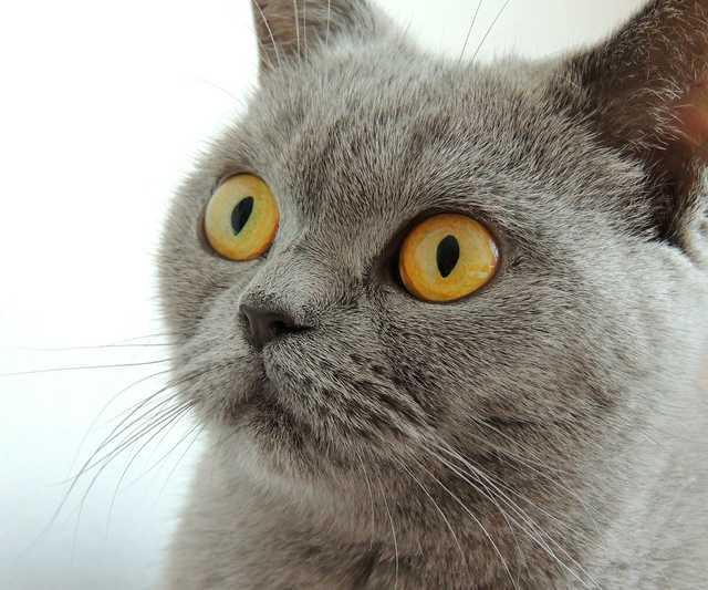 cat-179842_1920.jpg
