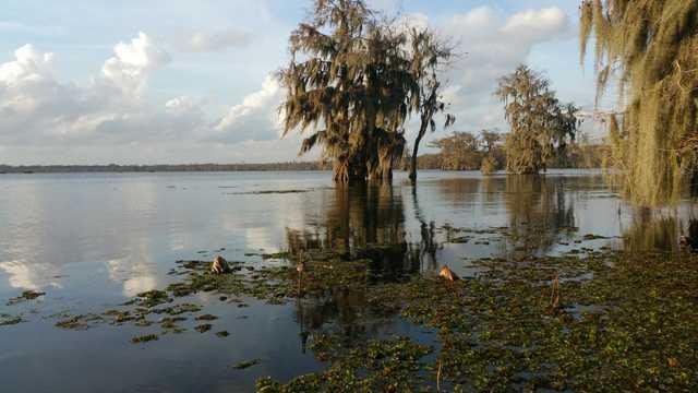 cypress_trees_moss_louisiana_lake_martin-659642.jpg