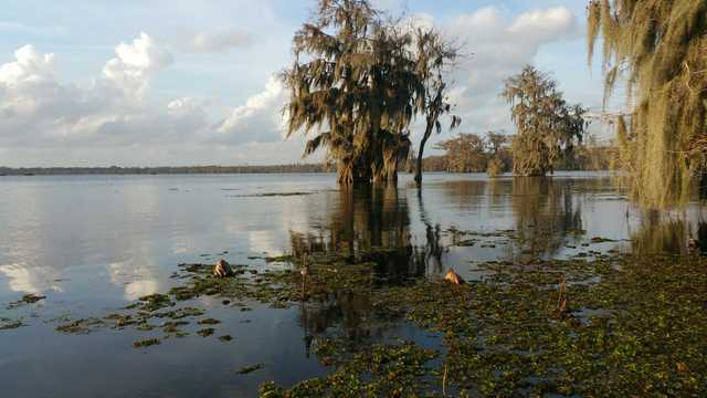 cypress_trees_moss_louisiana_lake_martin-659642.jpg