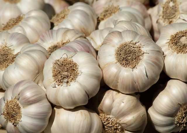 garden-garlic-harvest-357595.jpg