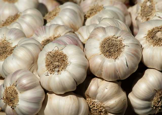 garden-garlic-harvest-357595.jpg