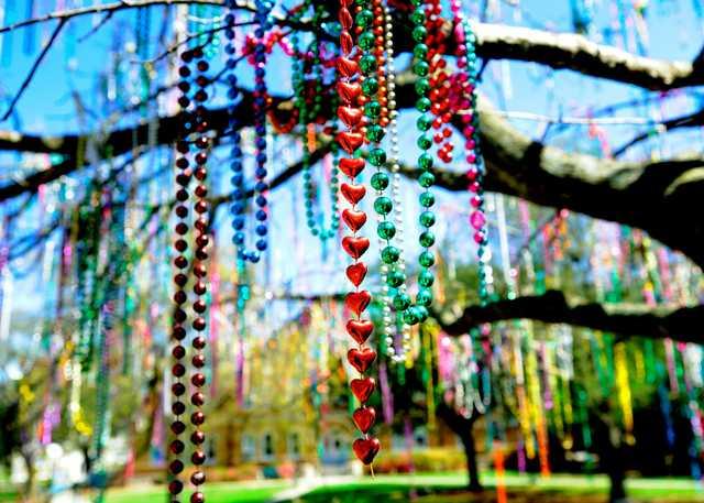 Mardi_Gras_Tree_on_campus_(5517893265).jpg