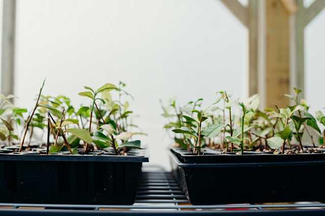 tea-nursery.jpg