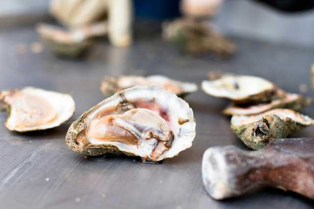 Oysters_CountryRoads-0005.jpg