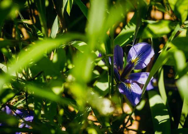 helen-peebles-iris_MAIN.jpg