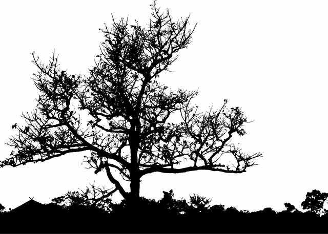 MaxPixel.freegreatpicture.com-Silhouette-Barren-Tree-Leaves-Landscape-Leafless-2026666-(1).jpg