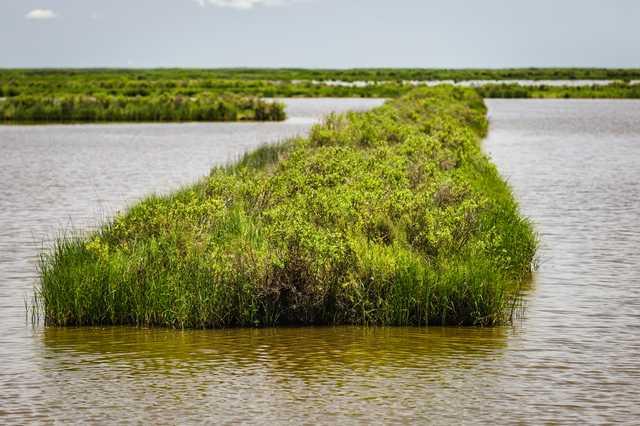 coastal-hunter-marsh.jpg