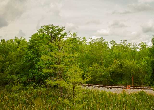 main_Train-forest-rails-full-res.jpg
