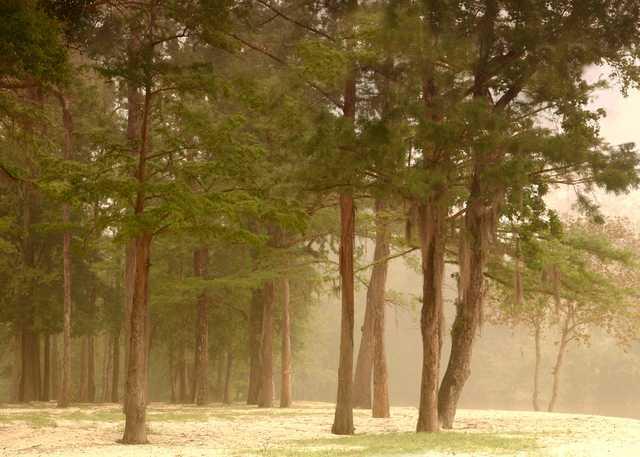 Hardwoods_Along_the_River.jpg