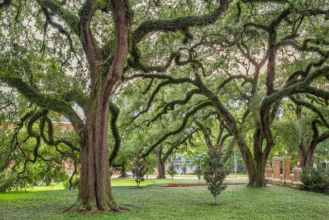 20th-century-oaks-1b.jpg