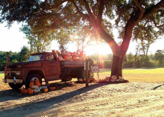 Grant Tree Farm