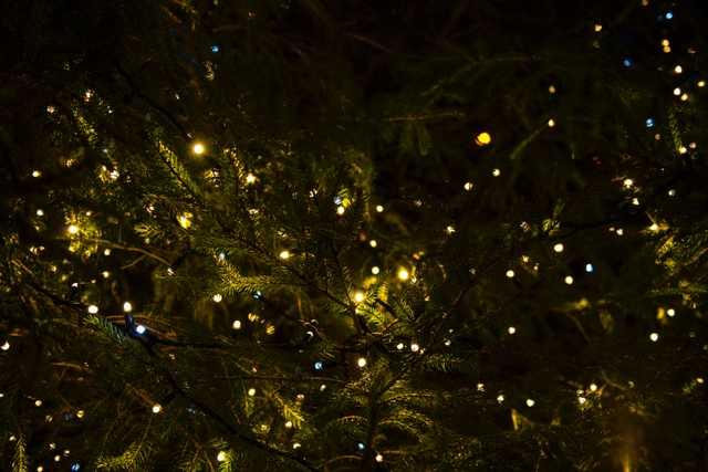 stock photo Christmas lights from unsplash
