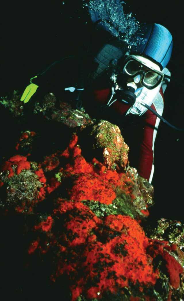 Coral_on_oil_platform_leg.jpg