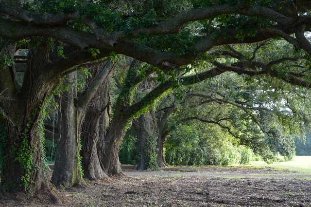 Oak-Alley-2.jpg