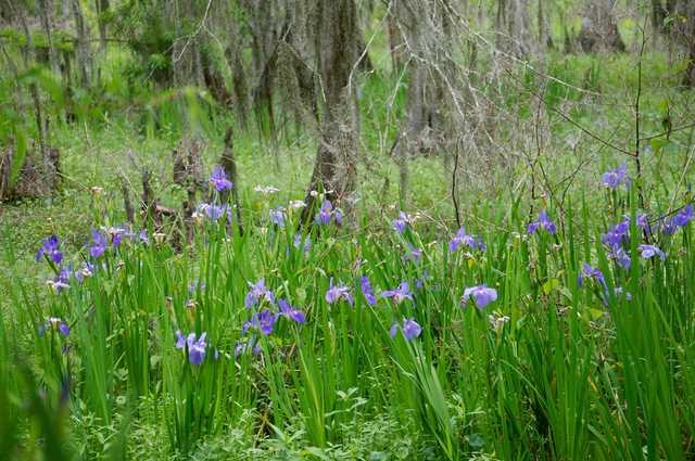 April-7.Lafitte-Irises-&-Kids.264.jpg