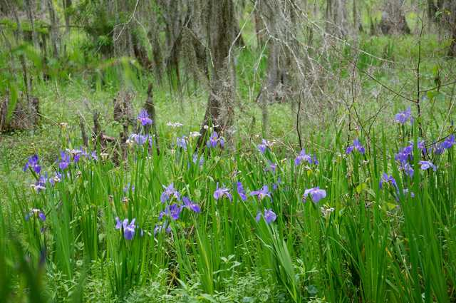 April-7.Lafitte-Irises-&-Kids.264.jpg