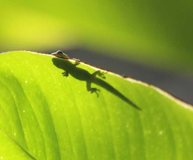 lizard-cropped.jpg