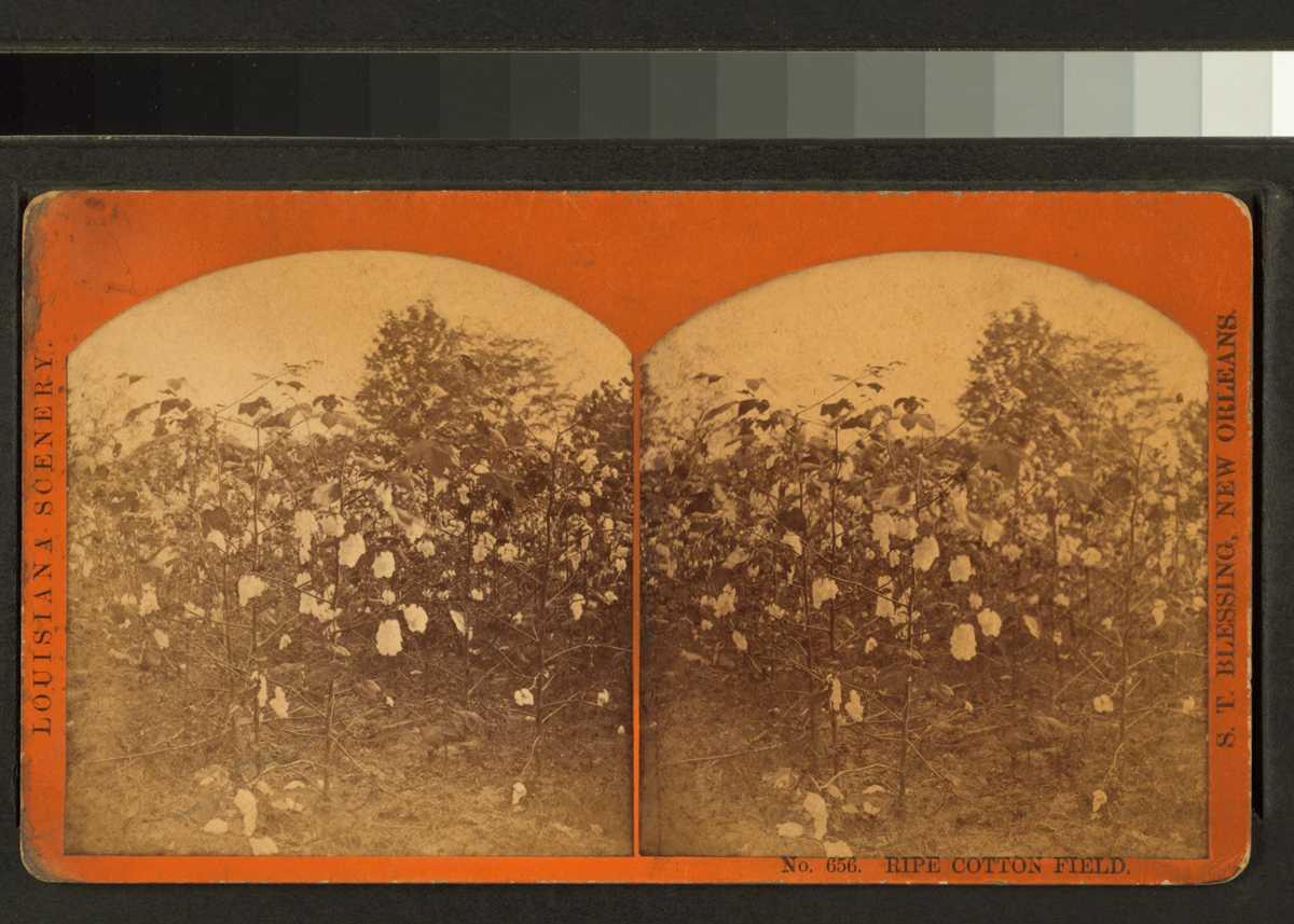 Pastimes: The History of Louisiana's Plantation Lease ...