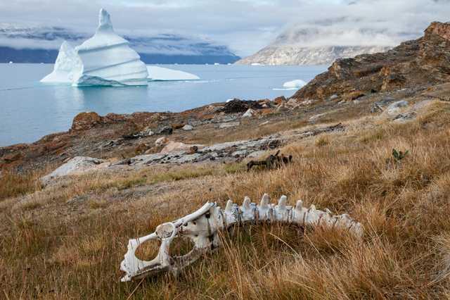 20130816_Scoresbysund_Fjord_Greenland_1073.jpg