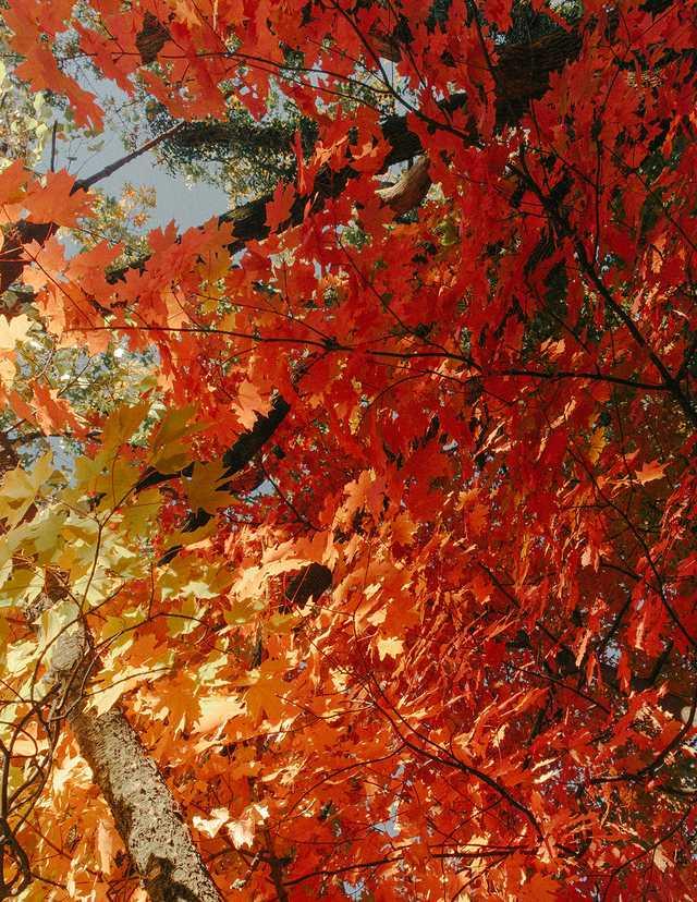 Fall-in-Fayetteville-12.jpg