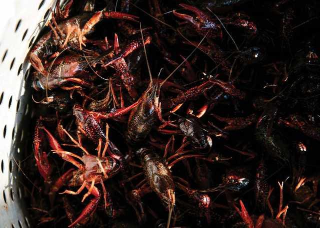 CR.20200421.Crawfish.004.jpg