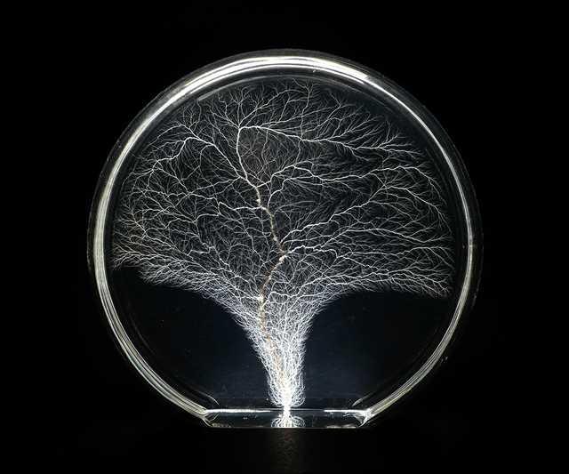 Tree-of-Life-Image-Edited.jpg