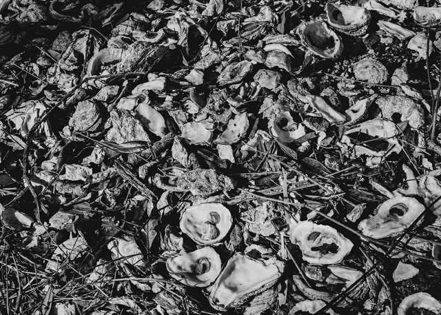 OysterShells-2-copy.jpg