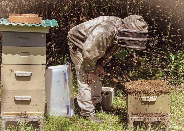 Bee22.jpg