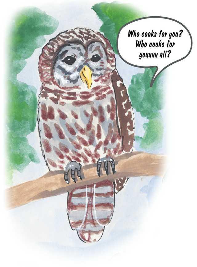 Birds-Barred-Owl.jpg