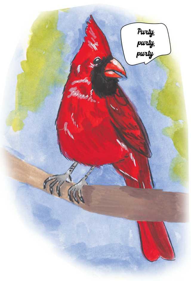 Birds-Cardinal.jpg