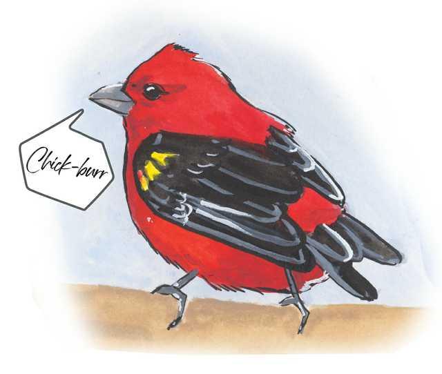 Birds-Scarlet-Tanager.jpg