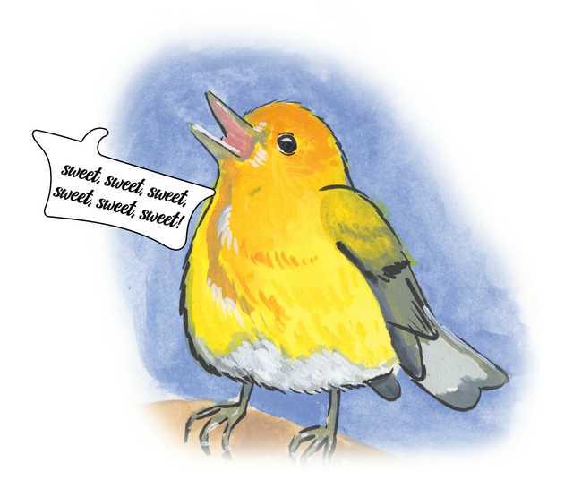 Birds-Swamp-Canary.jpg
