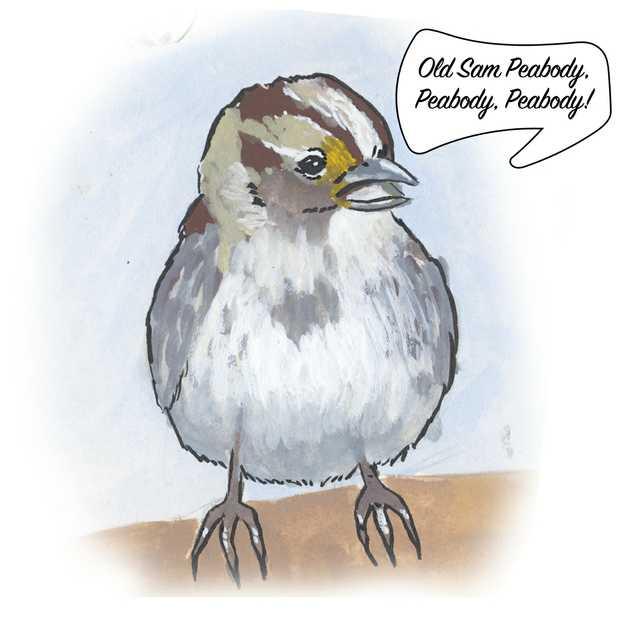 Birds-White-throated-Sparrow.jpg