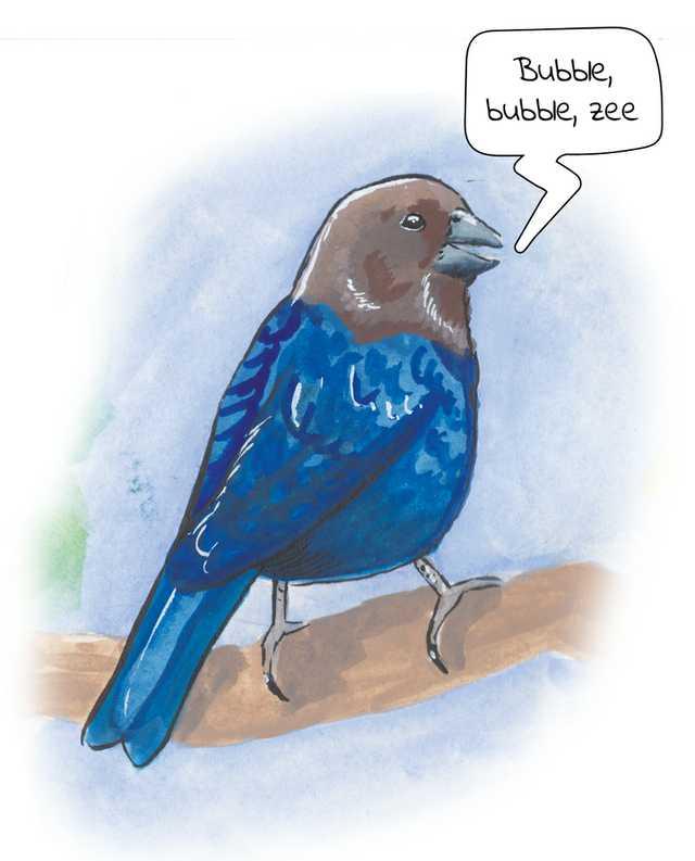 Birds-Brown-Headed-Cowbird.jpg