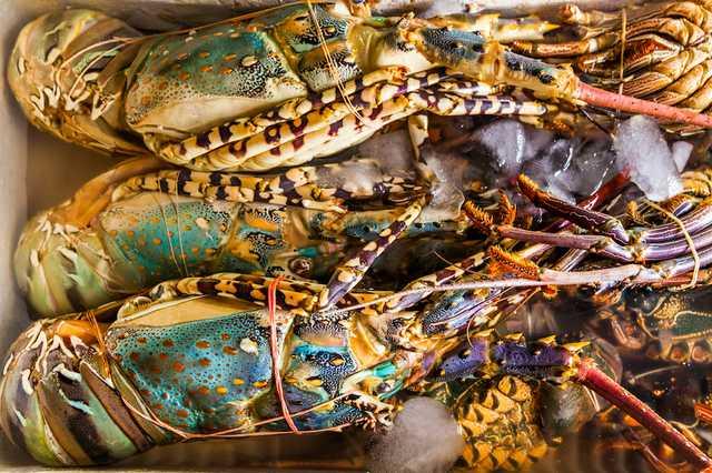fresh-lobster-at-the-seafood-market-VTHP3MR.jpg