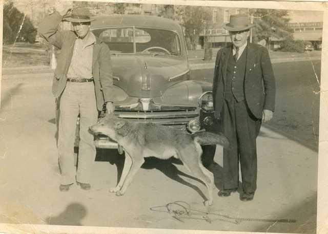 Red-Wolf-Doc-Harris-Dec.-24,-1947-12-miles-west-of-Winnfield.jpg
