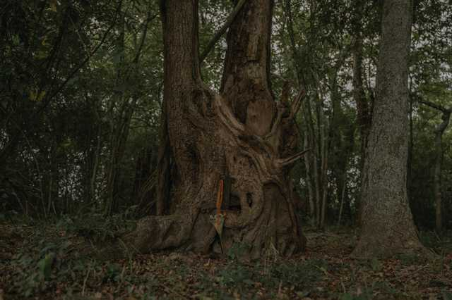 CR-Hidden-Cemetery_Evangeline-Parish_Olivia-Perillo---11.jpg