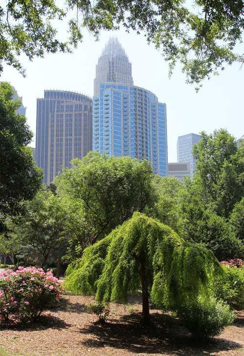 A View of Uptown Charlotte