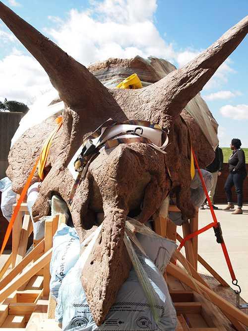 triceratops2.jpg
