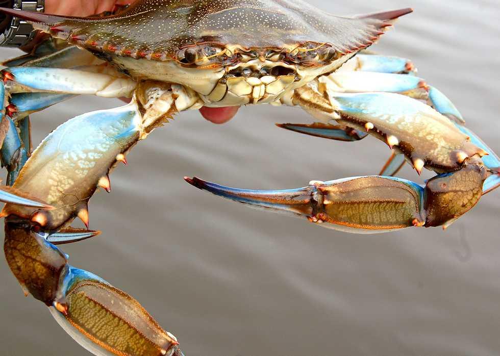 Blue Crab Restaurant New Orleans