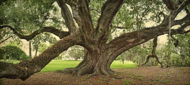 william guion oak full.jpg