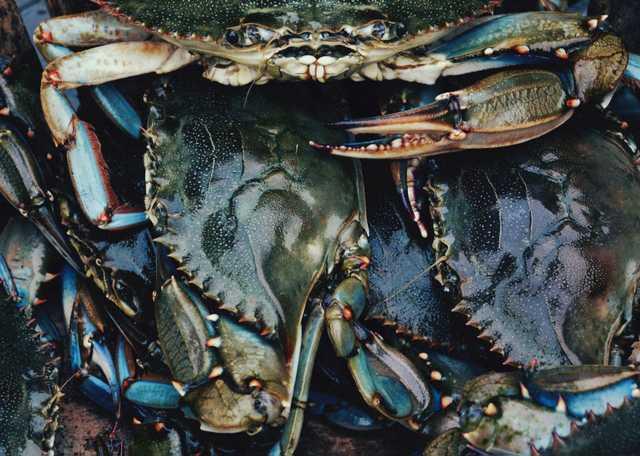 Bayou des Illettes Crab & Oyster Quiche