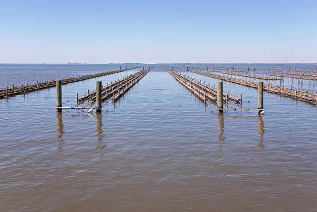 murder-point-oyster-company-sandy-bay.jpg