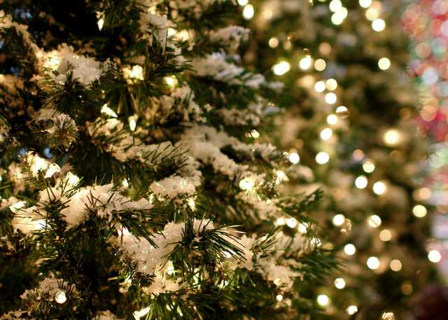 natchez_tree_lights.jpg