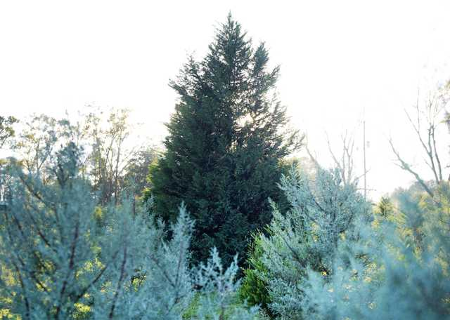 Windy Hills Farm Christmas Trees - Country Roads Magazine