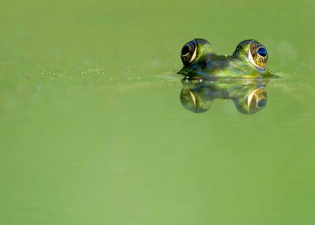 frog-watch.jpg