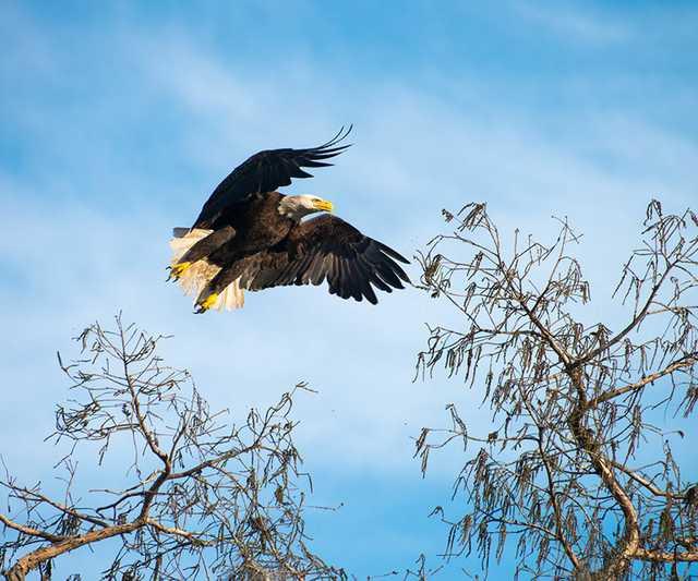 cc lockwood photo tips eagle.jpg
