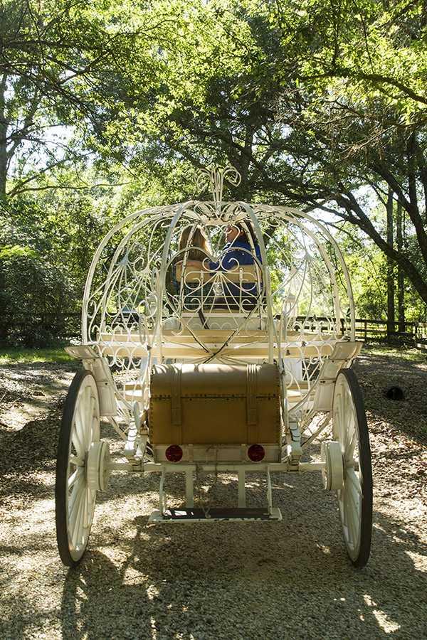 pegasus carriage back.jpg