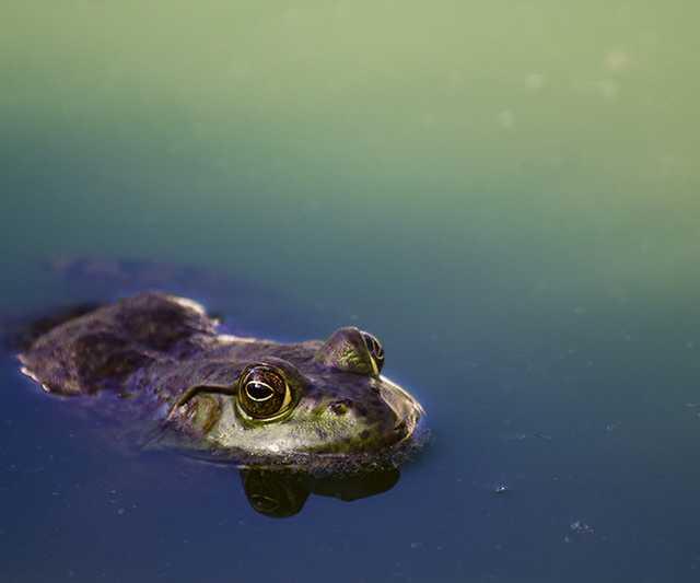 festive frog.jpg