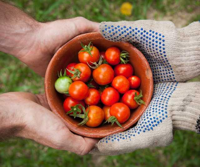 tomato.jpeg